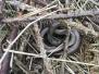 Hillwood Meadow Slow-worm Surveys