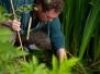 Corfe Avenue Bearcroft Pond Survey