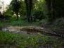 Tolladine Wood Pond Survey