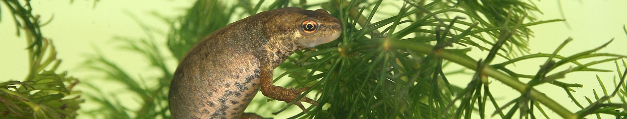 Worcestershire Reptile & Amphibian Group